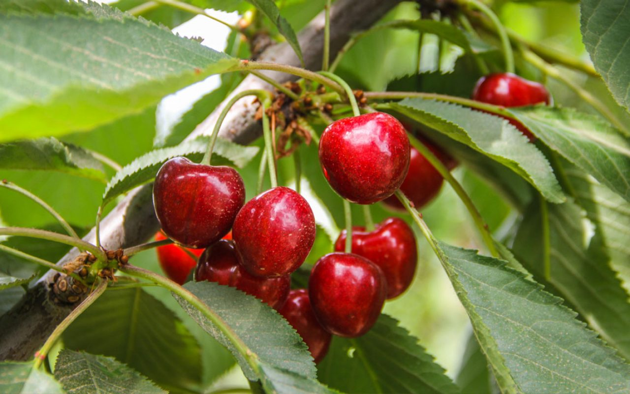 frutaorganica